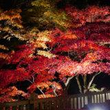 阿夫利神社下社のライトアップ