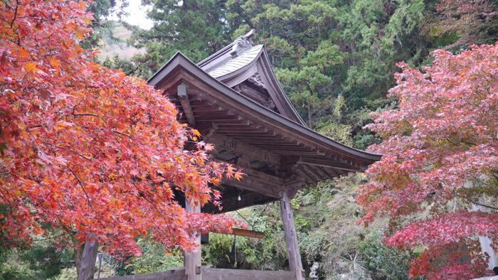 大山寺の鐘桜