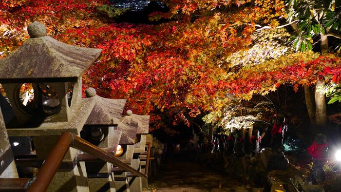 大山寺のライトアップ